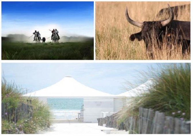 Excursion in Camargue and gala dinner on a private beach!