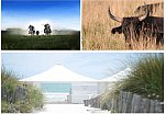 Excursion in Camargue and gala dinner on a private beach! June 2016 - 100 persons